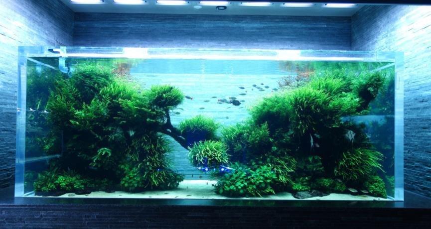 龙鱼的鱼缸如何选择?鱼缸DIY注意事项